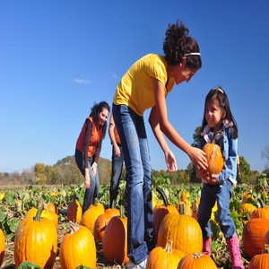 NW Arkansas Pumpkin Patches