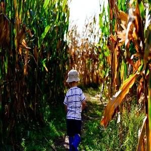 Northwest Arkansas Corn Maze