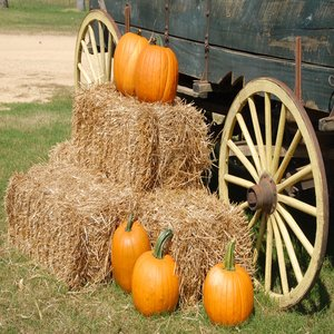 Hay Rides in Northwest Arkansas