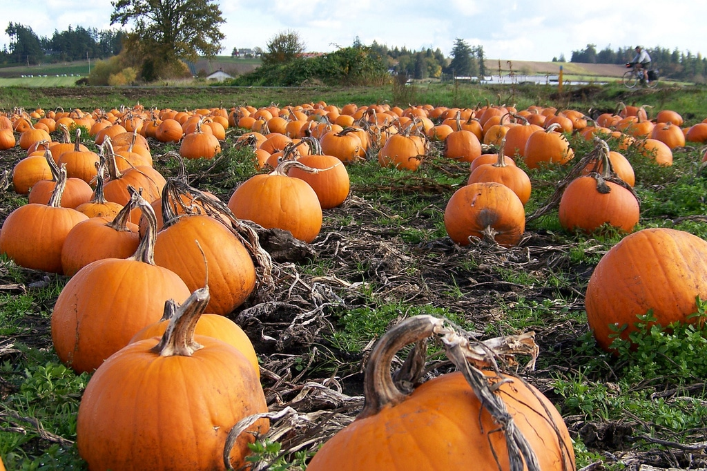 Harvest Festivals, Corn Mazes, Pumpkin Patches and Haunted Houses in Northwest Arkansas