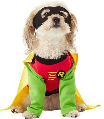 robin dog or cat costume